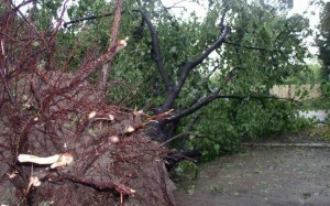 copaci-doborati-de-furtuna-300x187
